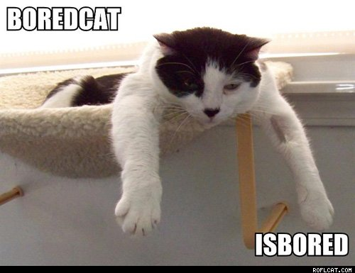 Bored cat, Znudzony Kot, Nuda, Gry o niewielkich wymaganiach