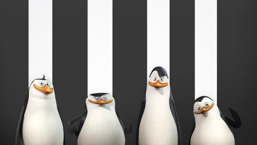 Pingwiny z Madagaskaru.